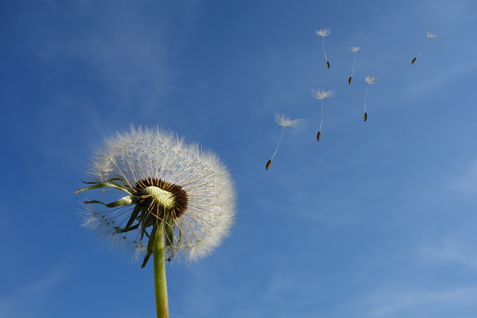 Qu'est-ce qui distingue les types de vent et de bile et de boue?